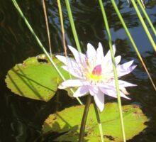 Queen of the Pond Sticker