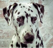 Hello Spotty Dog by Clare Colins