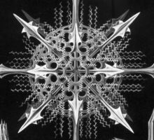 Haeckel Acanthophracta Sticker