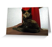Soli the tortie cat #2 Greeting Card