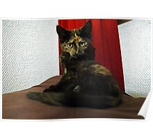 Soli the tortie cat #2 Poster