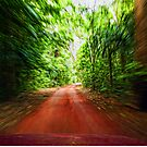 Rainforest Drive by V1mage