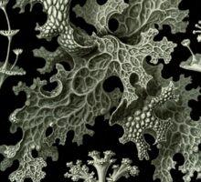 Haeckel Lichenes Sticker
