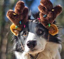 Reindeer Collie 2 by ZebsterBC