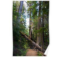 Fallen Tree in near Mount Rainier Poster