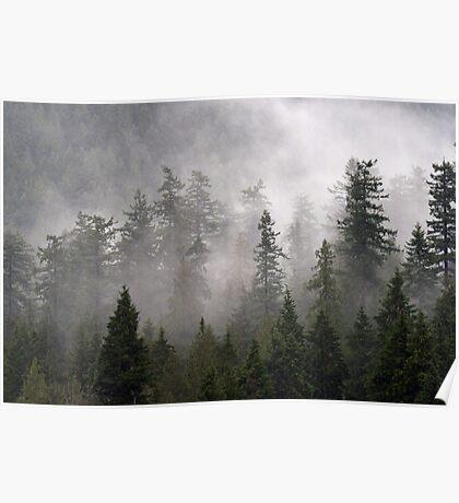 Clouds swirl around the treetops in Belcarra Regional Park Poster