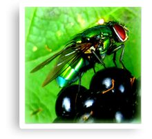Green Fly on Blackberry Canvas Print