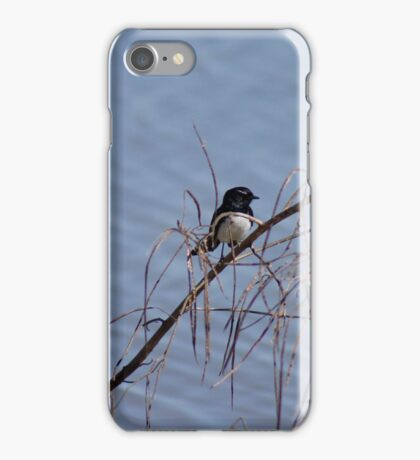 Willy Wagtail  iPhone Case/Skin