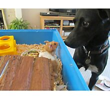 Hamster and dog  Photographic Print