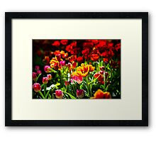 Colorful Tulip Flowers Framed Print