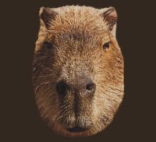 Capybara face by Dave  Knowles