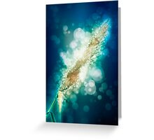 digitally manipulated flowering Reeds growing on a river bank Greeting Card