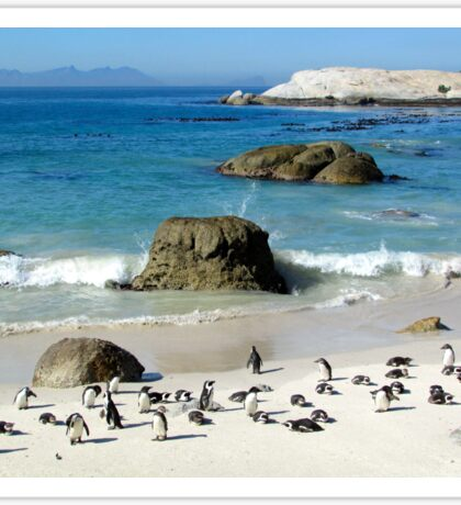 South African Penguins Sticker