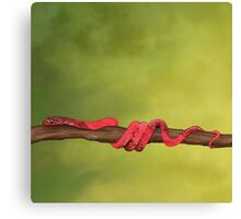 Honorable Snake on a Lime Sky Canvas Print