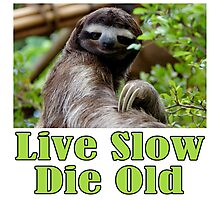 Mr. Sloth Says - Live Slow, Die Old Photographic Print