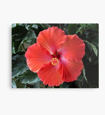 Hibiscus Flower Metal Print