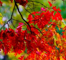 Beautiful colorful oak leaves, autumn day, nature concept Sticker