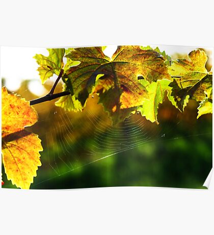 Spider net on grape leaves, vineyards of Alsace Poster