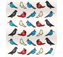 Birds Birds Birds! Poster