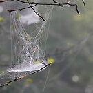 Hanging Web  1 of 4 by relayer51