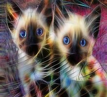 We Are Siamese by John Robert Beck by studiobprints