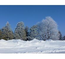 Snow Balm Photographic Print