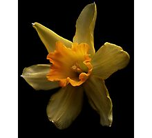 First daffodil of spring Photographic Print