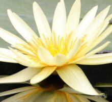 Yellow Water Lily Reflection Sticker