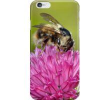 Honey bee on flower iPhone Case/Skin