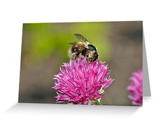 Honey bee on flower Greeting Card