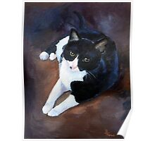 Black and White Cat portrait Poster