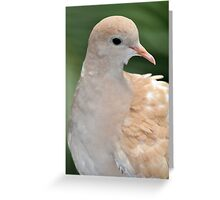 Brown dove Greeting Card