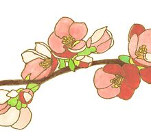 Pink on White Blossoms by Erin Nicholls