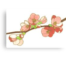 Pink on White Blossoms Canvas Print