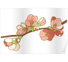Pink on White Blossoms Poster
