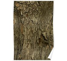 Silver Maple Poster