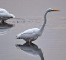 Great Egrets, Bombay Hook National Wildlife Refuge, Smyrna, Delaware, 2015 Sticker