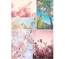 Spring Floral Sakura Collage Pink White Cherry Blossoms Photographic Print