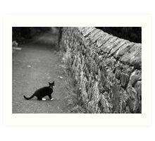 Cat in Scotland  Art Print