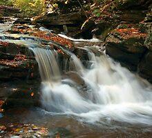 Conestoga In Autumn Shade by Gene Walls