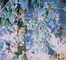 Vintage Ivy Edit by Noelle Mitchell