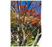 Japanese Maple Foliage at Queen Elizabeth Park Poster