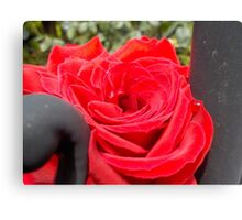 Iron Rose Macro Canvas Print