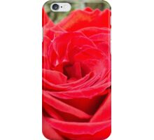 Iron Rose Macro iPhone Case/Skin