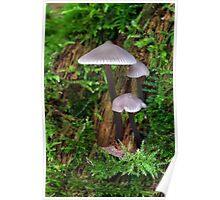Mushrooms in Campbell Valley Park Poster