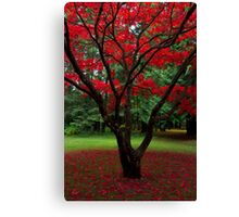 Japanese Maple Fall Leaves Canvas Print