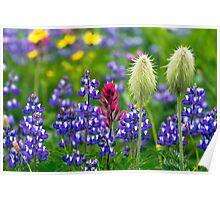 Wildflowers at Mount Rainier Poster