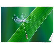 A Dandelion Seed Poster