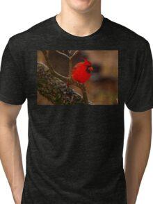Portrait of a Redbird Tri-blend T-Shirt