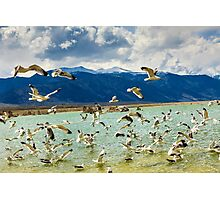 Mono Lake With Seagulls Photographic Print